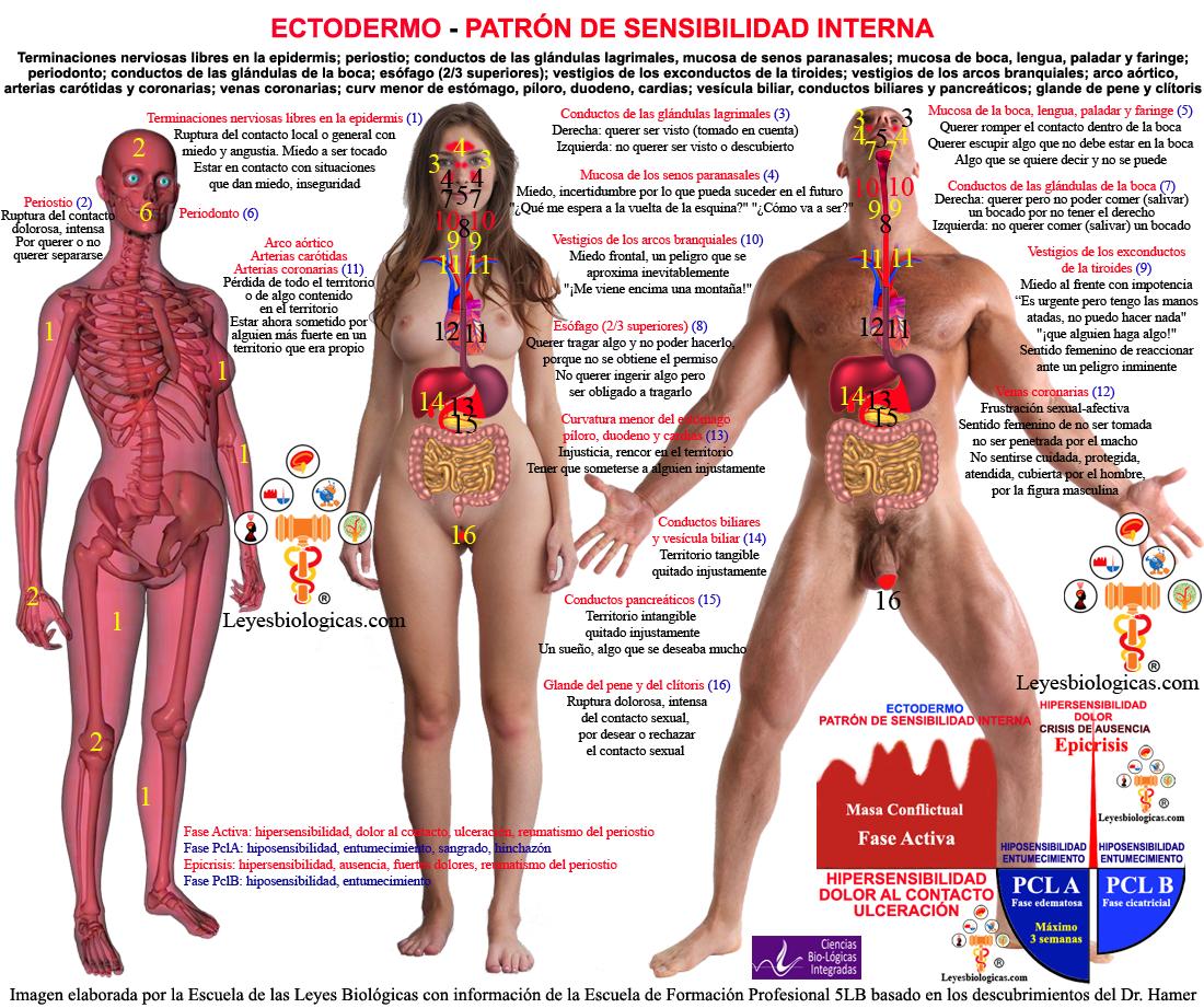 Escuela Leyes Biologicas Ectodermo Organos Ectodermicos SBS